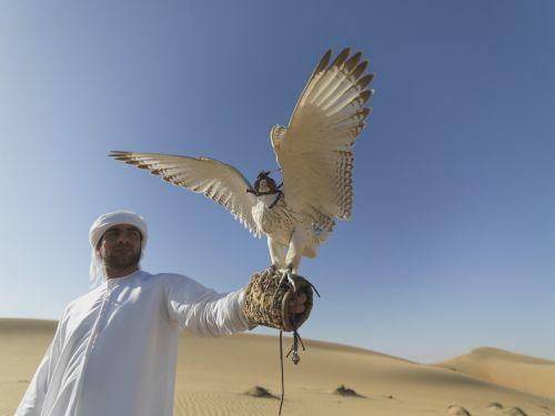 falcon uae desert