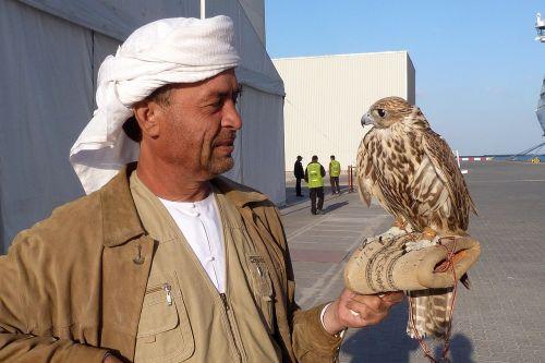 falcon falkner pinnate