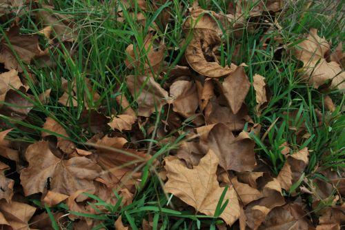 Fallen Leaves On Green Lawn