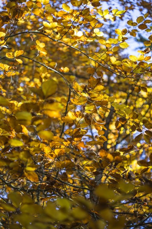 fall sun autumn