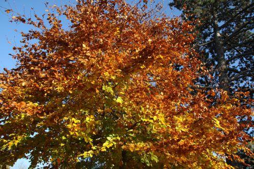 fall leaves autumn leaves