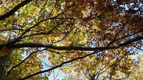 fall autumn fall leaves