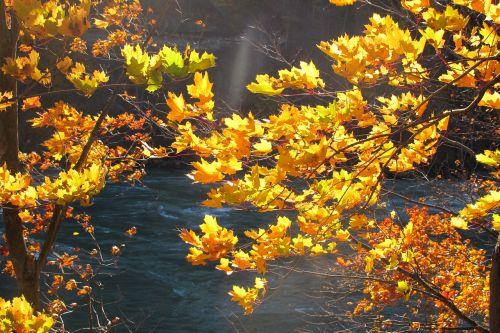 fall nature autumn