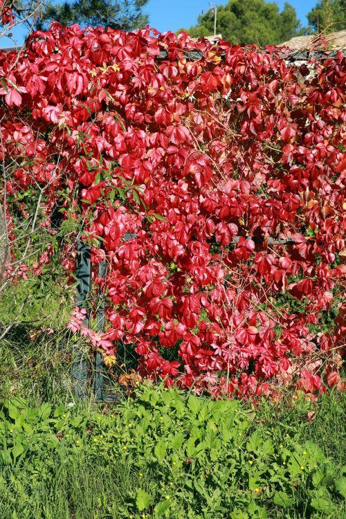 fall foliage nature