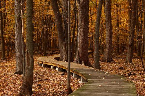fall leaves trail