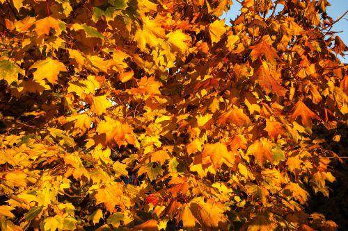 fall leaves orange