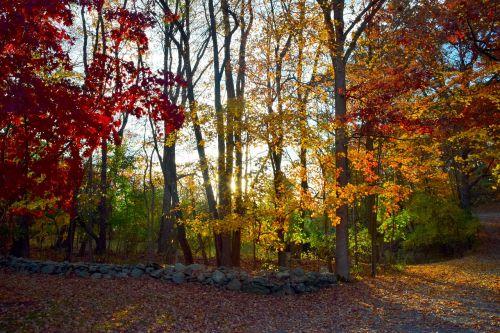 fall foliage color