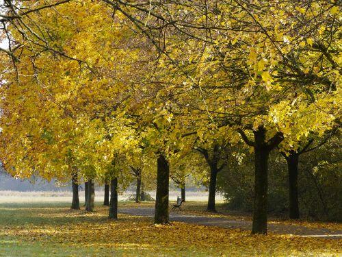 kritimas,kraštovaizdis,rudens kraštovaizdis,gamta,medžiai,spalvos,lapija