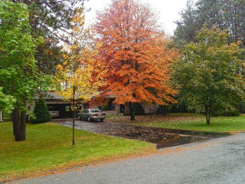 fall front yard orange
