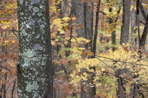 fall forest seasonal