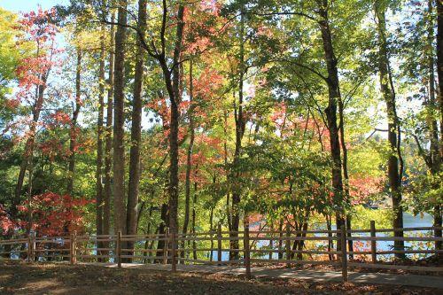 fall fall trees fall color