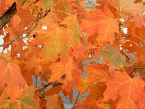 fall colors crisp