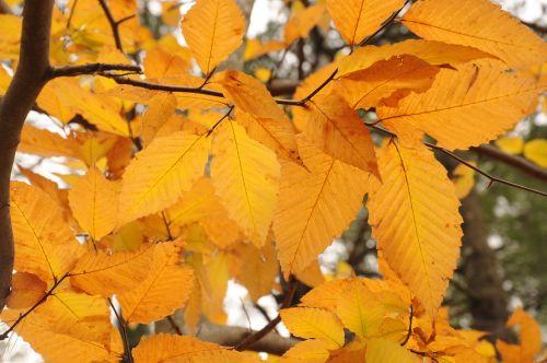 fall autumn leaves