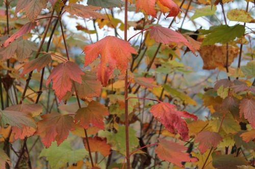 fall autumn leaves foliage