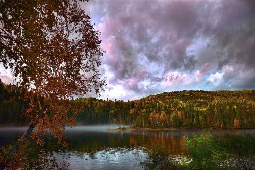 fall nature tree