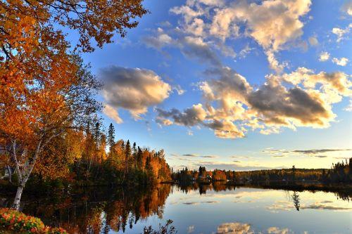 fall autumn landscape autumn leaves
