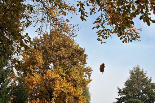 fall autumn jesienneliście