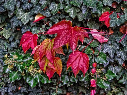 fall autumn october