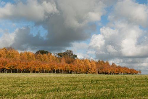 fall landscape nature