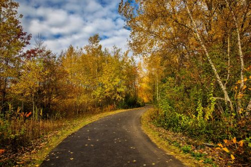 fall,foliage,leaves,yellow,orange,trees,road,path,park,nature,seasons,moody,autumn,autumn day,beautiful nature,nature photography,nature pics