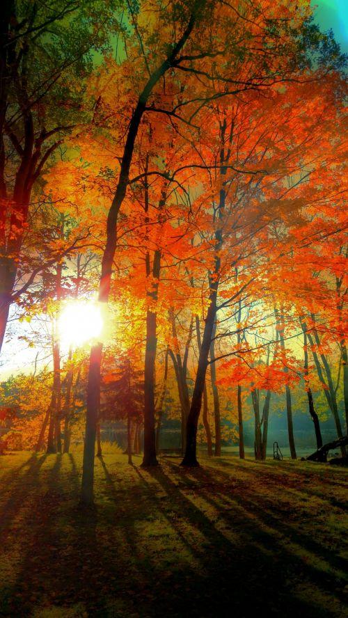 ruduo, medis, gamta, lauke, kritimas, lapai, upė, kritimas 3