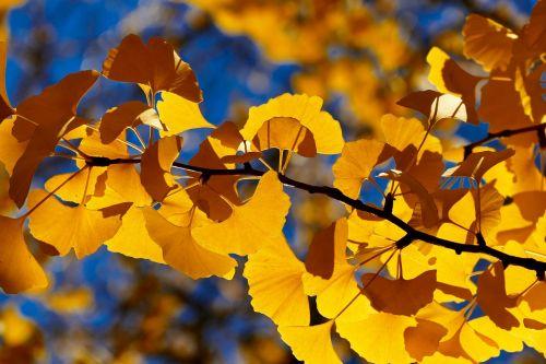 fall leaf tree