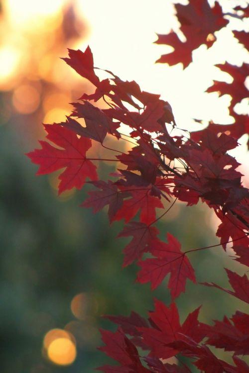 fall autumn leaf