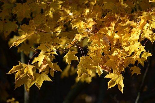 fall  autumn  yellow