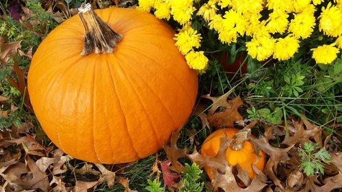fall  autumn  pumpkin