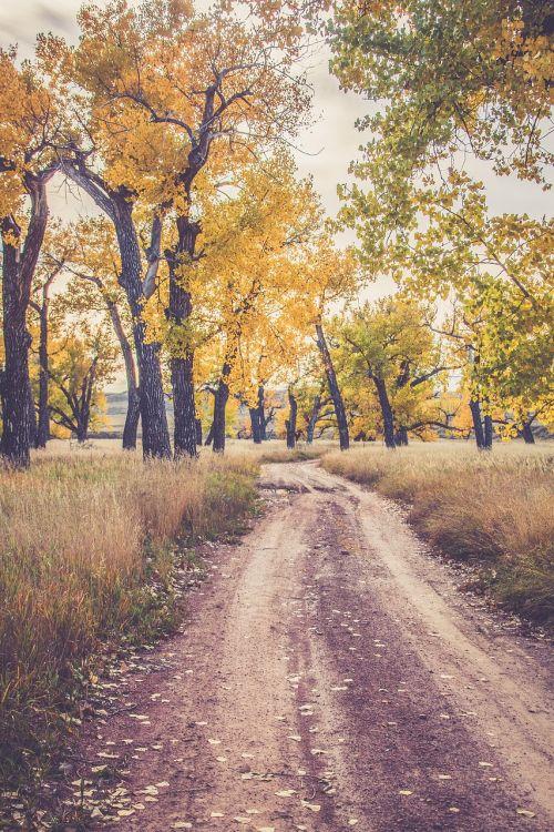fall color autumn