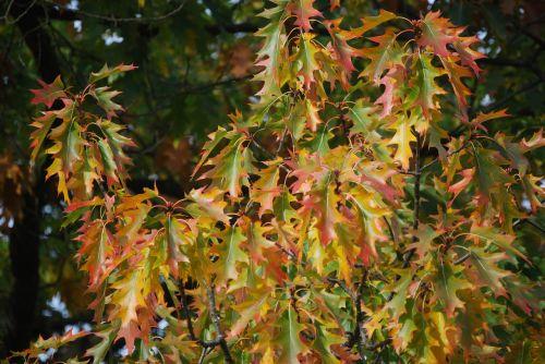 fall color fall foliage foliage