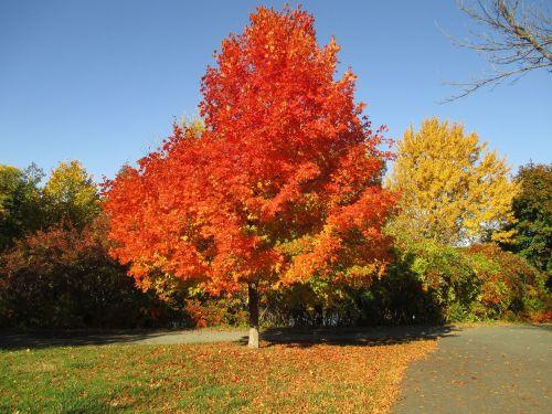 fall colors fall autumn