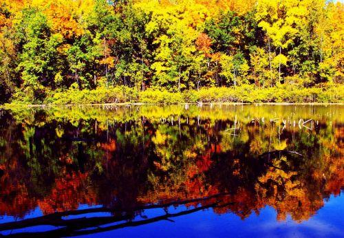 fall colors fall foliage fall