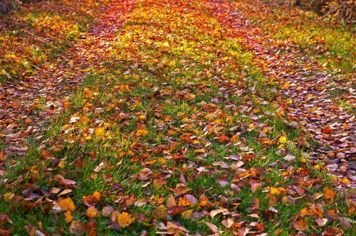 fall foliage golden autumn autumn