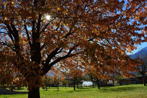 fall foliage tree sun