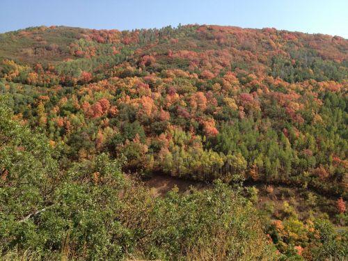 fall foliage colors autumn