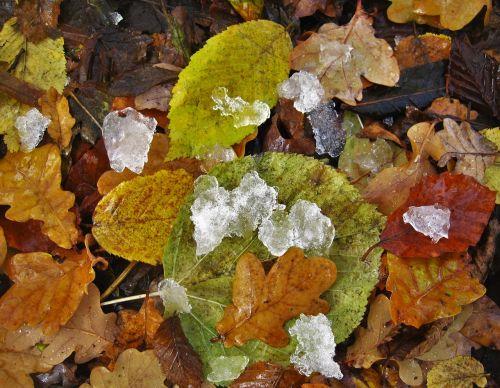fall foliage eisbröckchen cold season