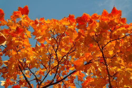 fall foliage leaves autumn