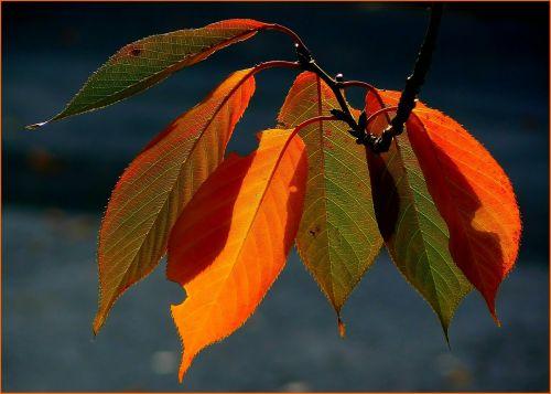 fall foliage colorful leaves autumn colours