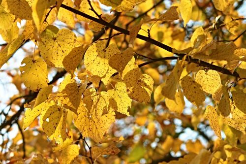 fall foliage tree leaves