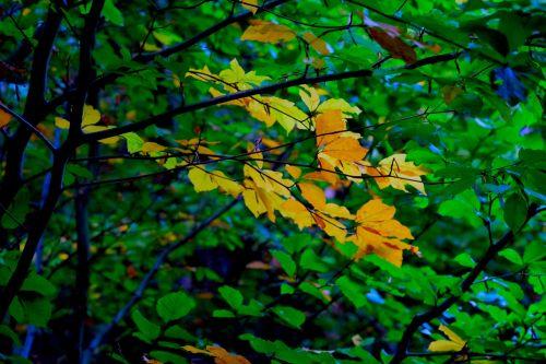 fall foliage deciduous tree autumn