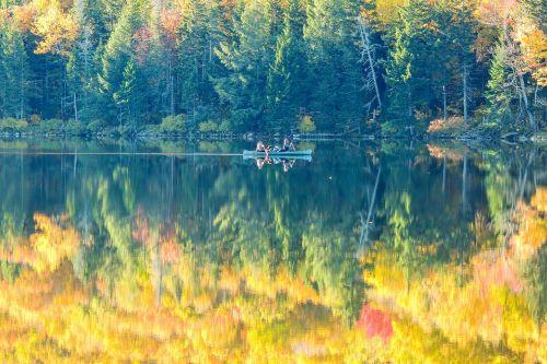 fall foliage fall autumn