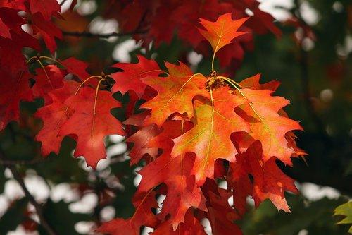 fall foliage  leaves  colorful