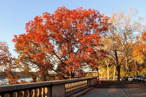 fall foliage  hamilton heights  autumn