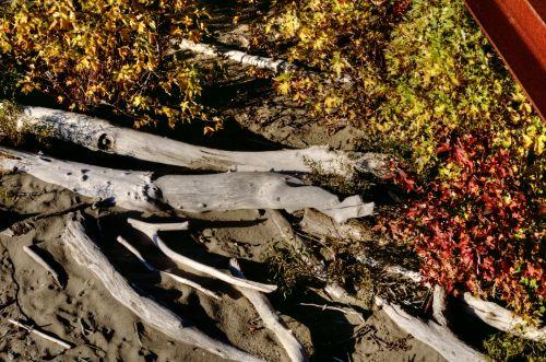 Fall Foliage And Logs