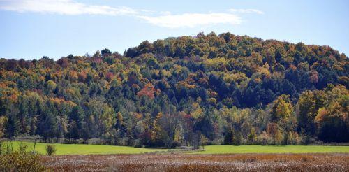 Fall Foliage Landscape