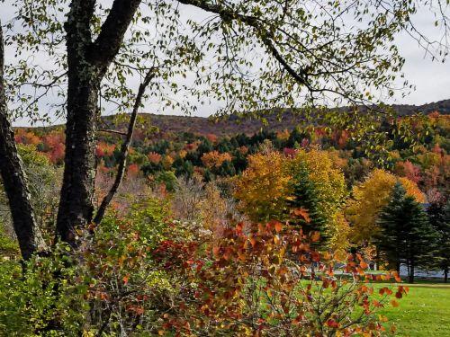 kraštovaizdis, Vermont, ruduo, kritimas, lapai, lapija, spalvinga, kritimo lapija