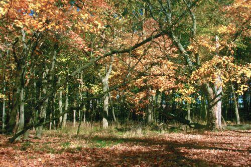 kritimas, ruduo, miškas, lapai, medžiai, kritimo miško scenoje