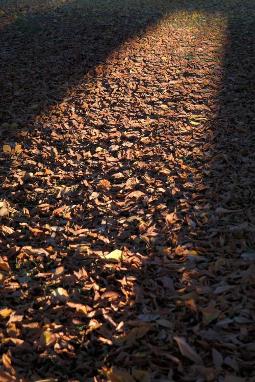 fall leaves autumn colours sunbeam