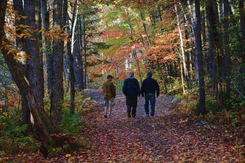 fall leaves autumn fall